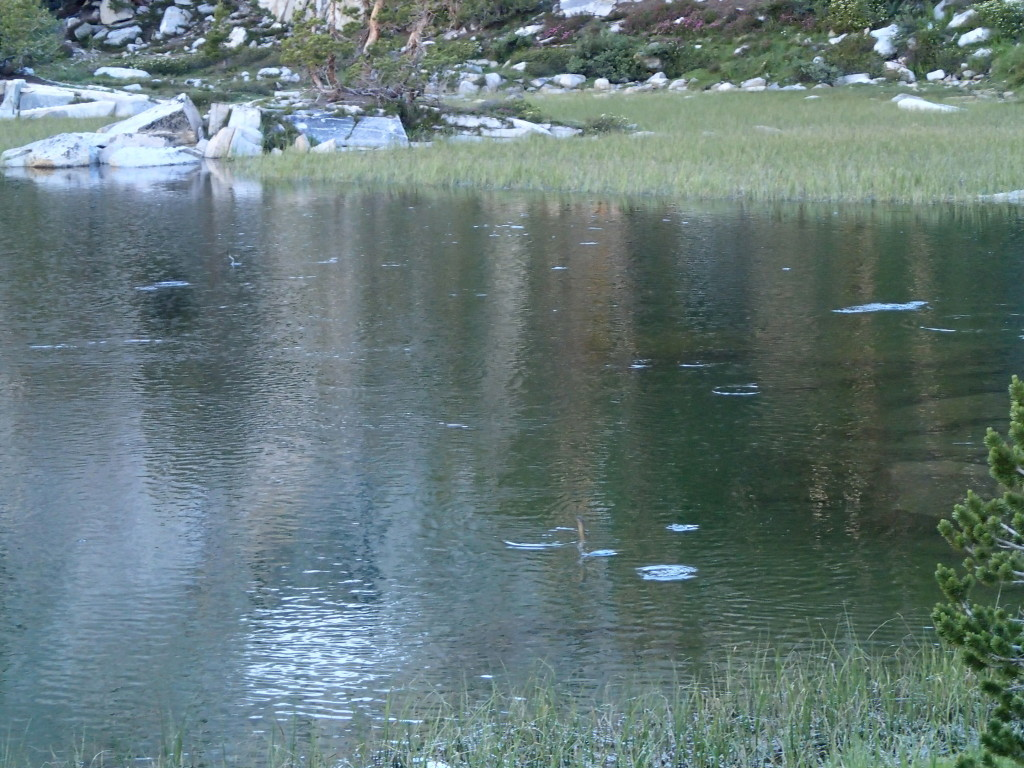 Yes those are rises in one of the Gem Lakes right next to our camp.  but look closely.  You can see two brook trout that have jumped completely out of the water to grab the midges