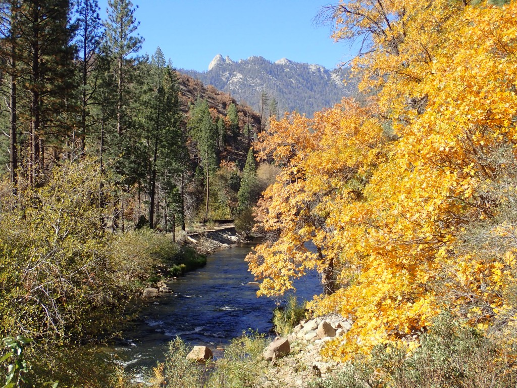 Check out the fall colors on the Upper Kern