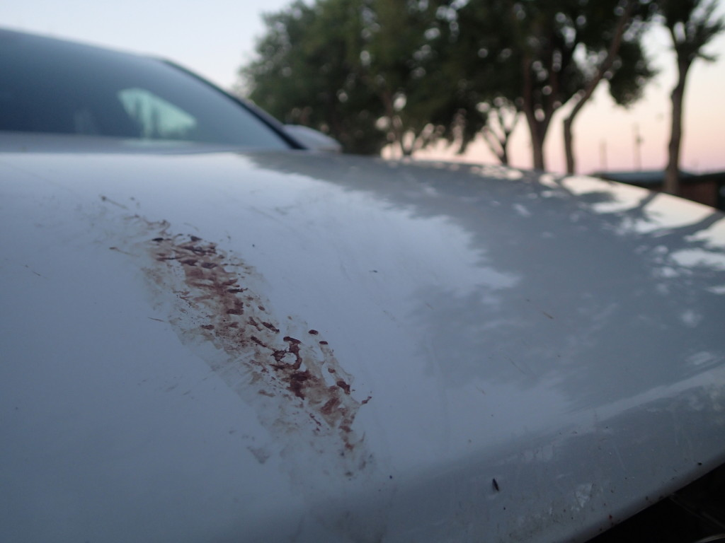 Blood on the Rental Car