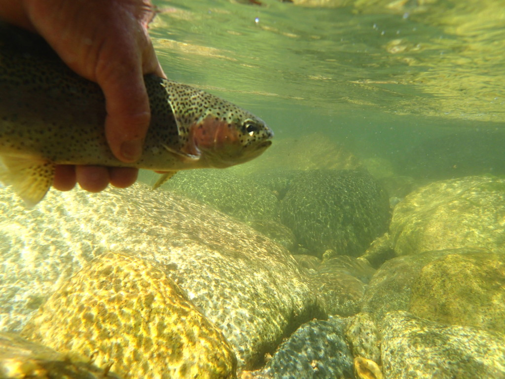 The Kern River Rainbow as shot by my Olympus Tough T2 camera