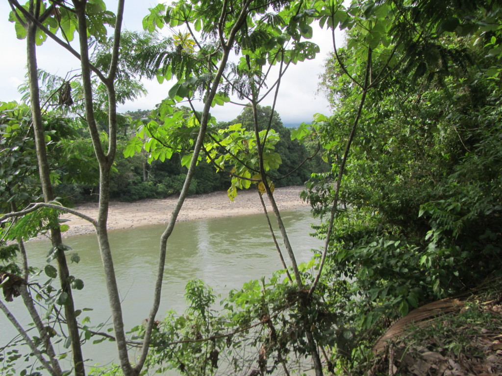 The view of the Napo River from my bungalo at Misahuallí Lodge